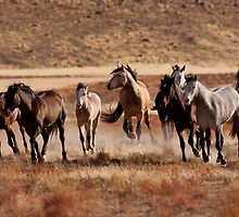 Thundering Hooves by Kent Keller