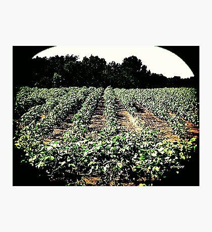 Farms 1432 Photographic Print