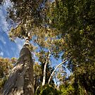 From the ground to the sky (National Botanic Garden, Canberra/ACT/Australia) by Wolf Sverak