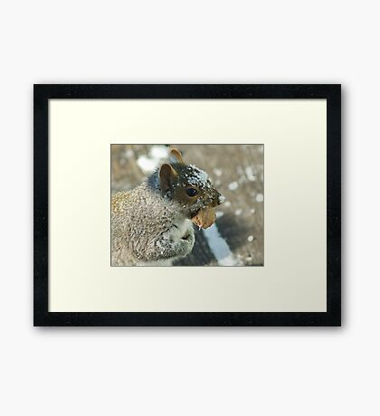 Squirrel with Brazil Nut Framed Print