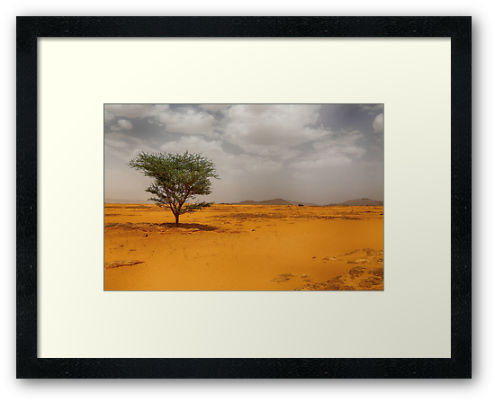 Lonely Tree by Omar Dakhane