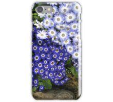 Daisies in Melbourne Botanical Gardens, Australia iPhone Case/Skin