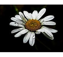 Daisy Drops Photographic Print