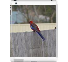 Crimson Rosellas iPad Case/Skin
