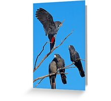 Red-tailed cockatoo family living life Greeting Card