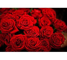 Red, red, roses Photographic Print