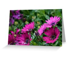 Bright Daisies after the rain Greeting Card