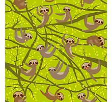 Cute Sloths on green Photographic Print
