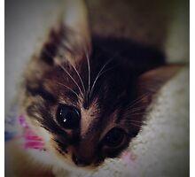 New Kitten Photographic Print