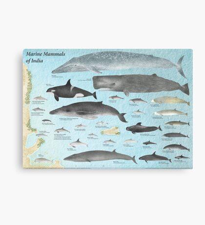 Marine Mammals of India Canvas Print