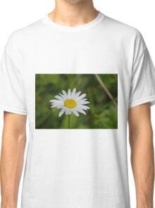Oxeye Daisy at Gwithian Nature Reserve in Cornwall Classic T-Shirt