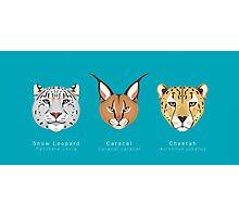 Three Big Cats Photographic Print