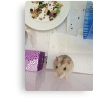 Hamster Face Canvas Print