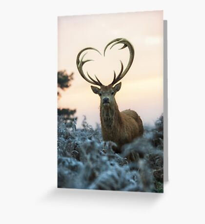 Stag With the Heart Shaped Antlers (love you deer) Greeting Card