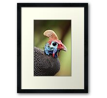 Guineafowl Portrait - Petrusburg, Free State, South Africa Framed Print