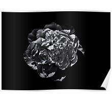Backyard Flowers In Black And White 19 Poster