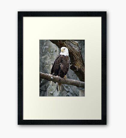 Lone Eagle Framed Print