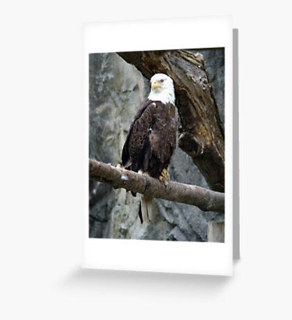 Lone Eagle Greeting Card