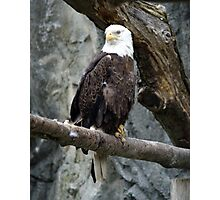 Lone Eagle Photographic Print