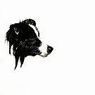Borde Collie en blanco negro by dedakota