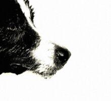 Borde Collie en blanco negro Sticker