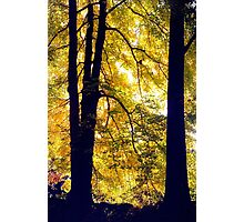 Autumn Silhouette Photographic Print