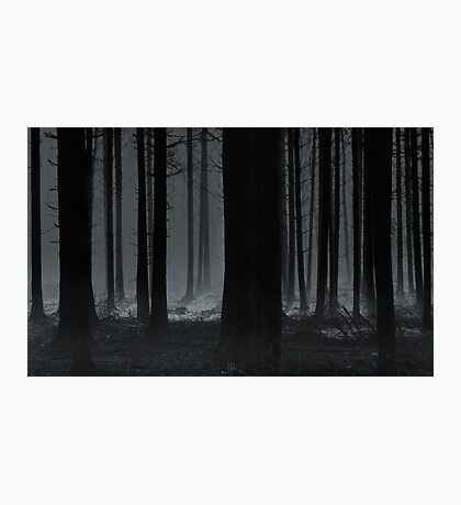 Black Trees of Agarwood Photographic Print