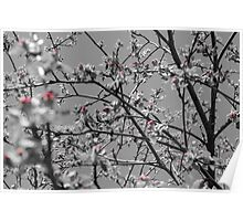 pink flower buds on apple Poster