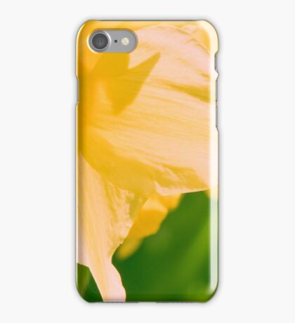 daffodil yellow flower blooming in the bright sunshine iPhone Case/Skin