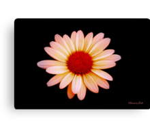 Painted the Color of Sunrise~ Daisy Canvas Print