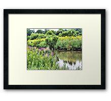 Wetlands in Summer Framed Print