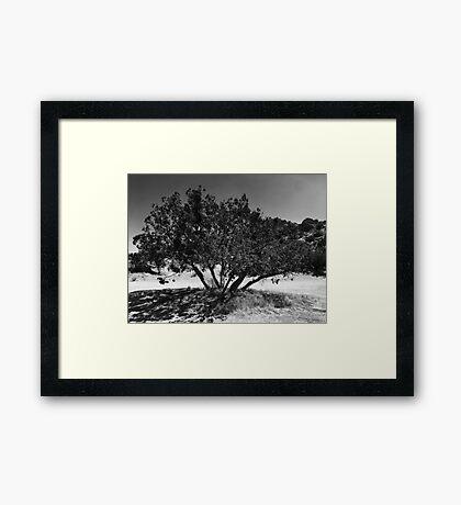 Desert Tree Framed Print