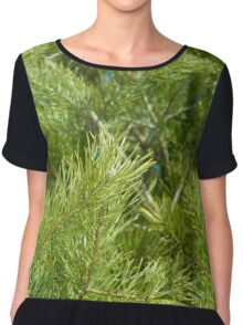 bright needles on pine branches in the light of the spring sun Chiffon Top