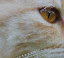 Red-haired cat in the street. House is reflected in her eyes Sticker
