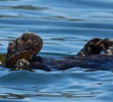Sea Otter Photography Print Sticker