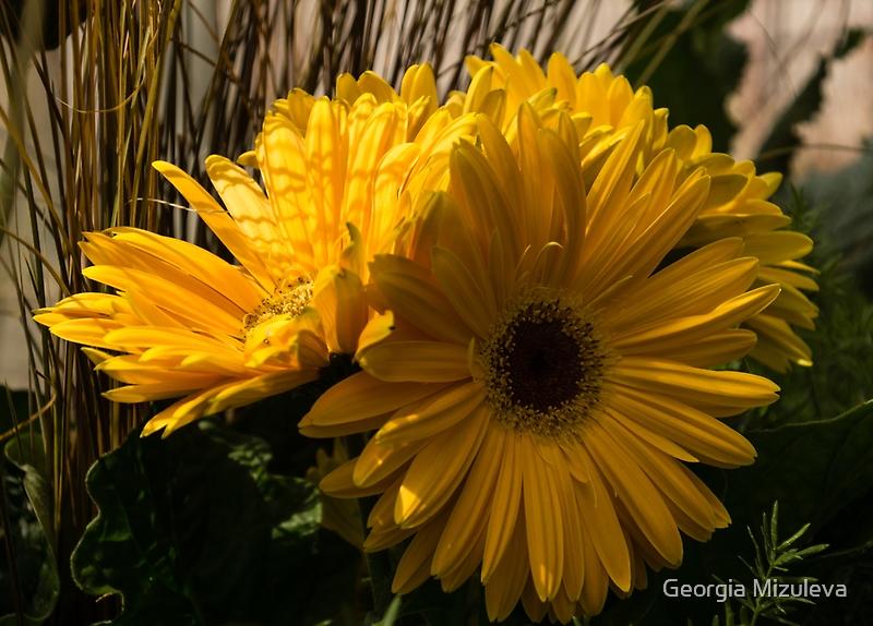 Three Sunshine Yellow Gerbera Daisies by Georgia Mizuleva