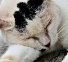 Cat Dreaming Sticker