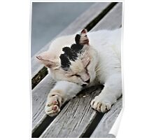 Cat Dreaming Poster