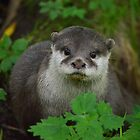Beautiful Otter by Dorothy Thomson
