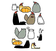 Cats! Photographic Print