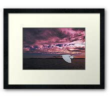 Great Egret at Sunset. Photo Art, Prints, Gifts. Framed Print