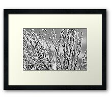 Dark and Fluffy Framed Print
