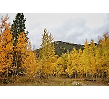Fall in the Rockies #5 Photographic Print