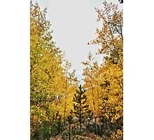 Fall in the Rockies #8 Photographic Print