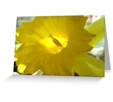 Spring Fanfare Greeting Card