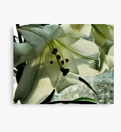Leaf and Veins Canvas Print