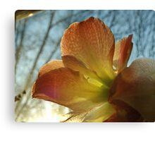 Amaryllis in the Window Canvas Print