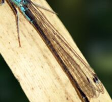 Damselfly on a Leaf Sticker