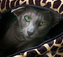 Lovely lilac - Farida the Oriental by Odille Esmonde-Morgan
