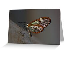 Glasswing butterfly Greeting Card